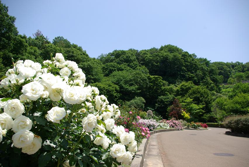 花フェスタ記念公園04