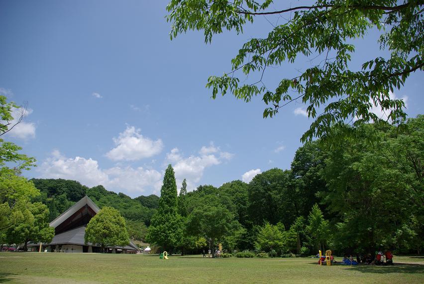 花フェスタ記念公園12
