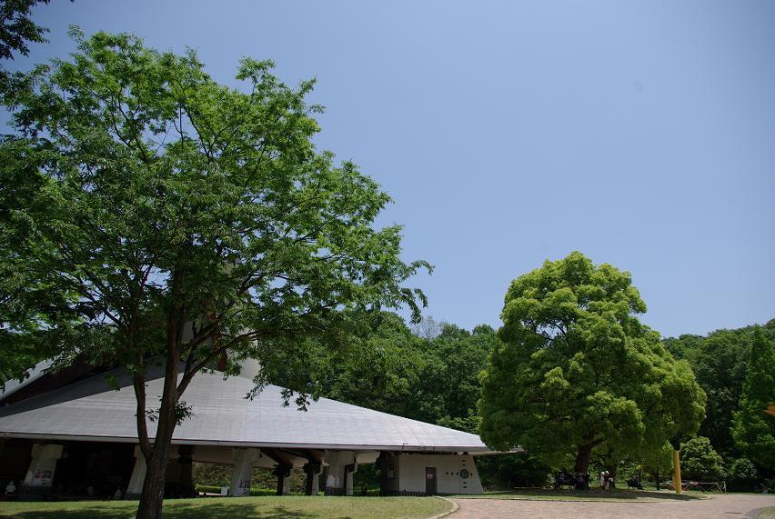 花フェスタ記念公園10