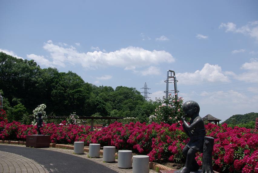 花フェスタ記念公園09