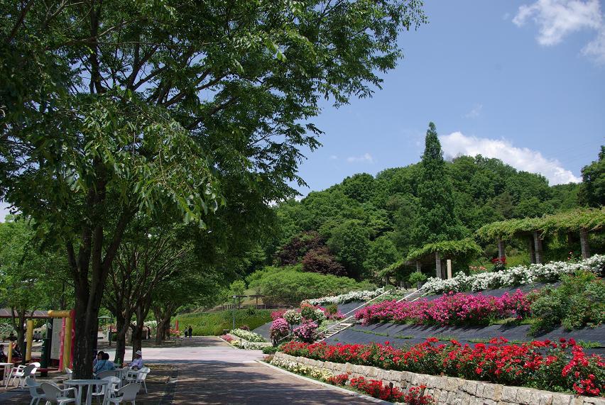 花フェスタ記念公園07