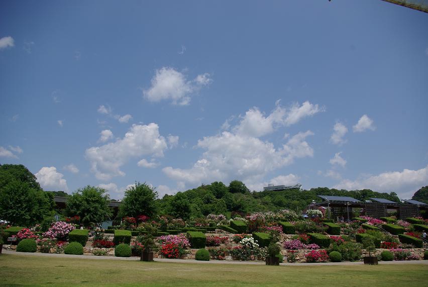 花フェスタ記念公園13