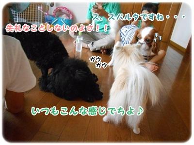 DSCN2346.jpg