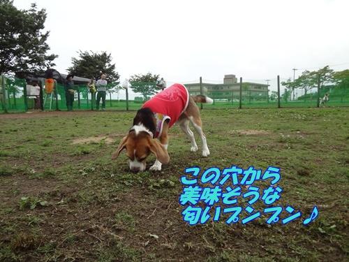 DSC06234_20120708141946.jpg
