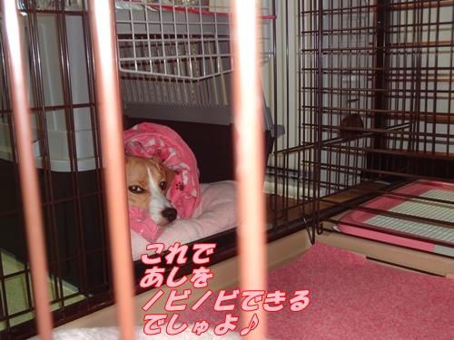 DSC06779_20120804112558.jpg
