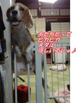 DSC06864_20120802170329.jpg