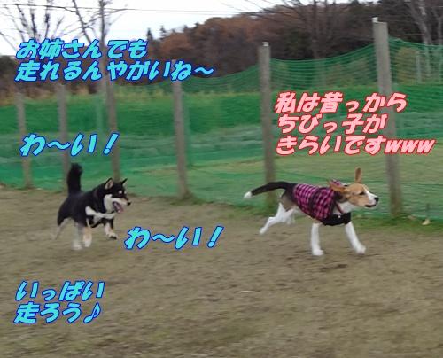 DSC07554_20121130162552.jpg