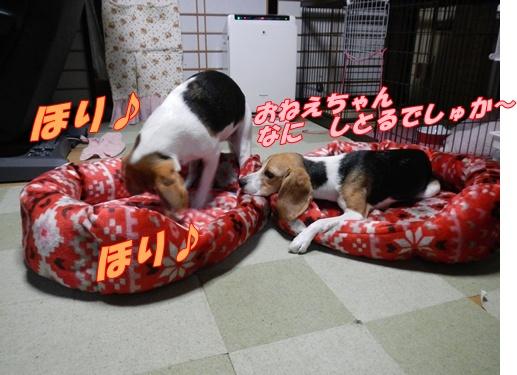 DSCN1369_20121017161157.jpg