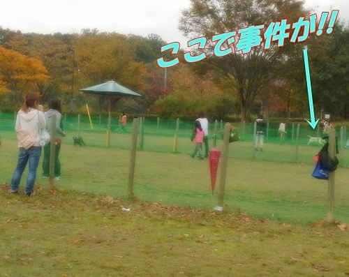 DSCN2047_20121107142251.jpg