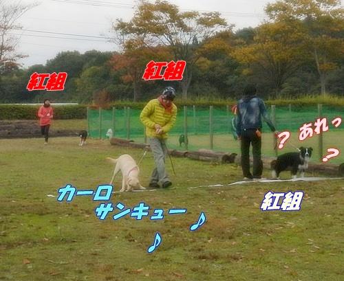 DSCN2048_20121107174749.jpg