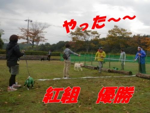 DSCN2052_20121107174749.jpg