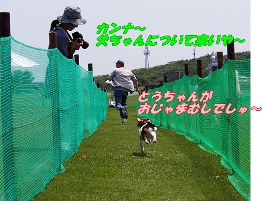 P5277680.jpg