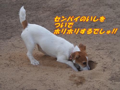 P6069159.jpg