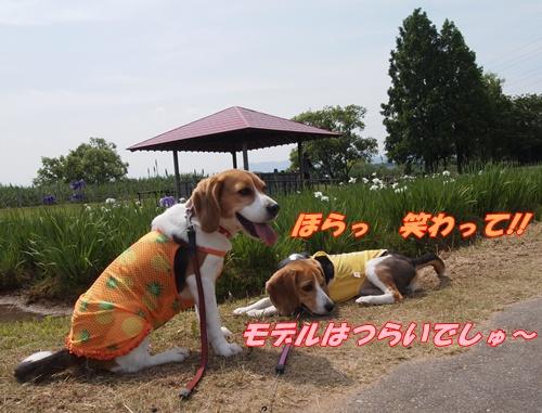 P6089298.jpg