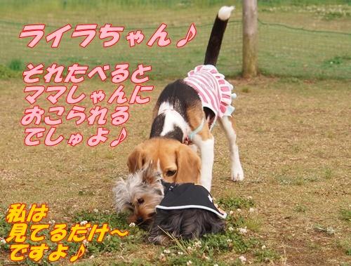 P6139640.jpg