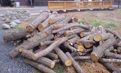 2013 薪の原木