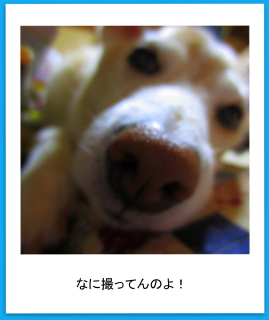 IMG_0179-001.jpg