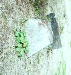 新地、倒れた石碑