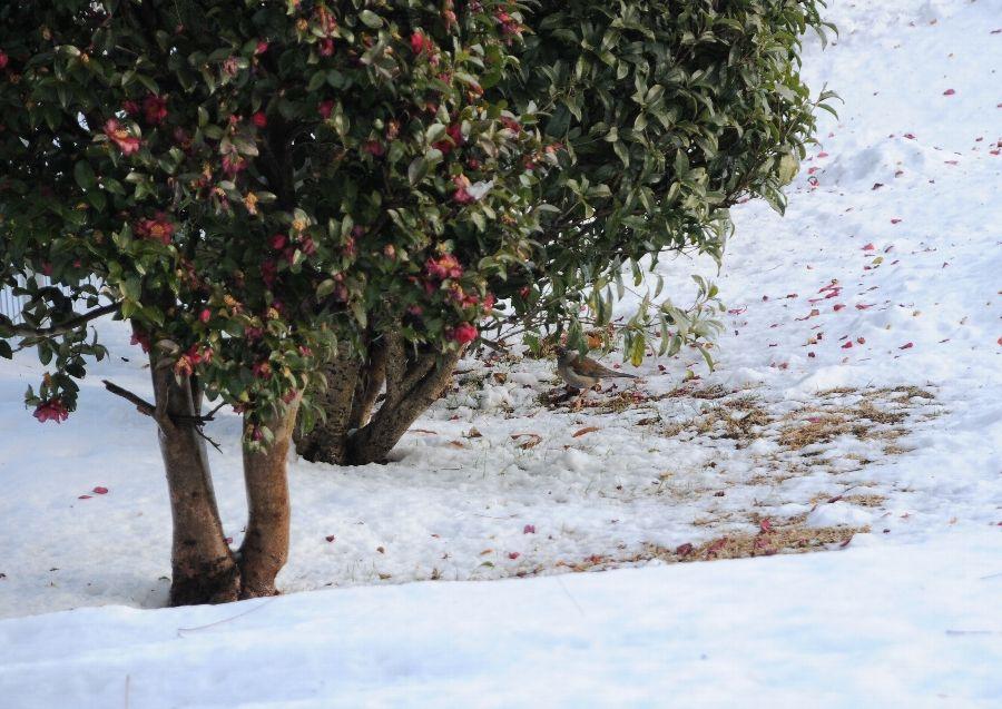 2014-02-15-snow-002.jpg