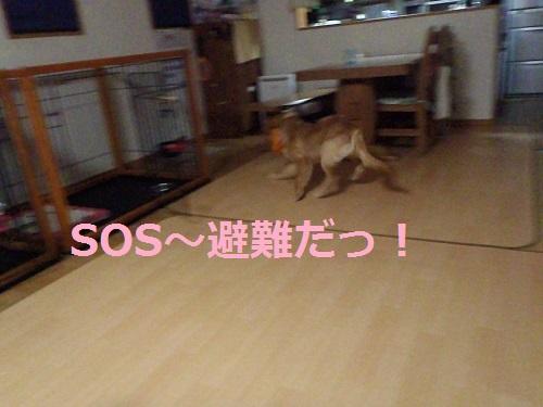 P9240080.jpg