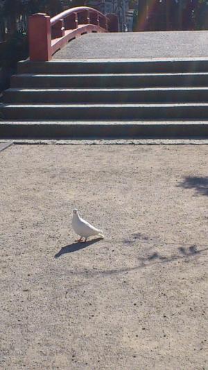 源平池ハト