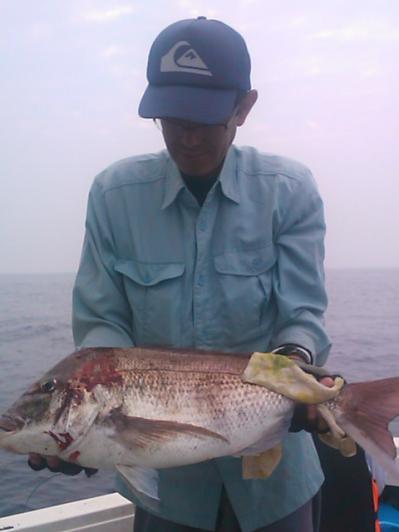 福岡の釣り船が壱岐で釣れた真鯛です。