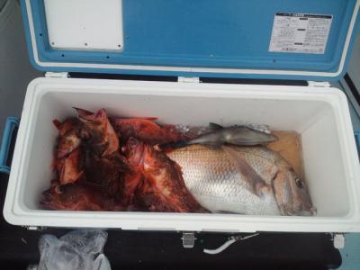 壱岐での真鯛、イサキ釣り