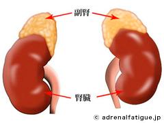 adrenal_ga.jpg