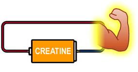 creatin1-01.jpg