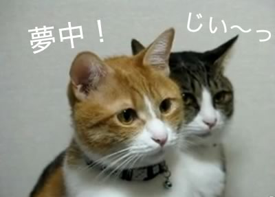 muchu_neko.jpg