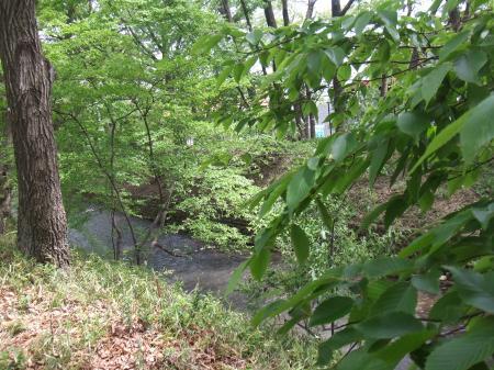 新緑の玉川上水