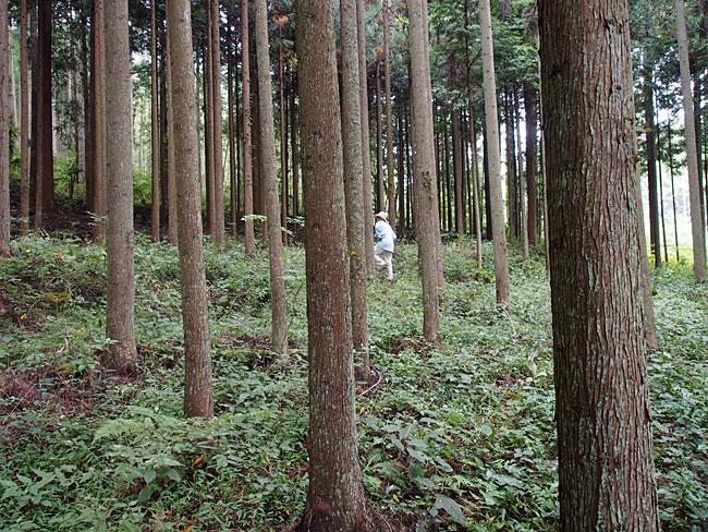 八幡神社・森林組合裏