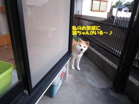 IMG_9305うめちゃん
