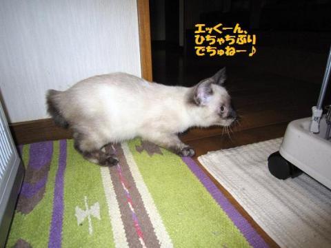 IMG_9765ソニカちゃん