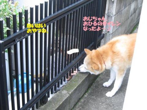 IMG_9798うめちゃん