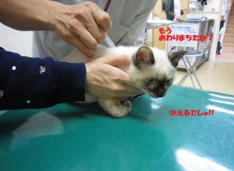 IMG_9940ソニカちゃん