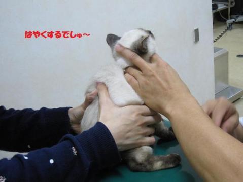 IMG_9938ソニカちゃん