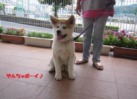 IMG_0182秋田犬