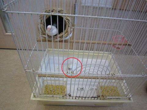 IMG_0180小鳥さん
