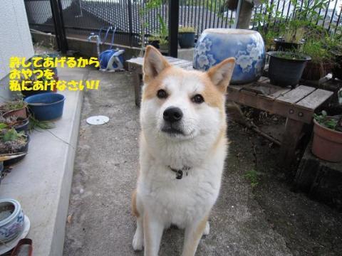 IMG_9812うめちゃん