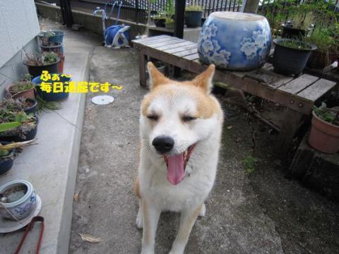 IMG_9811うめちゃん