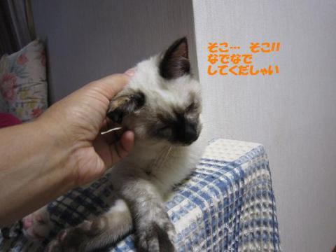 IMG_0479ソニカちゃん