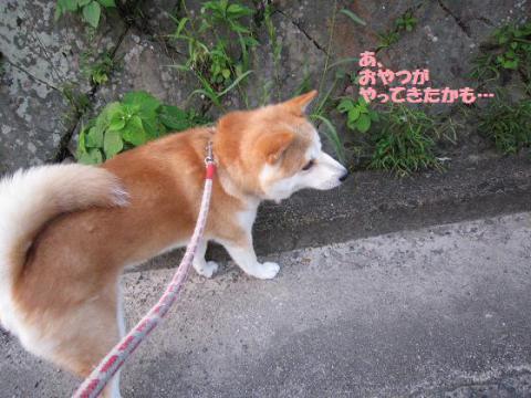 IMG_0825うめちゃん