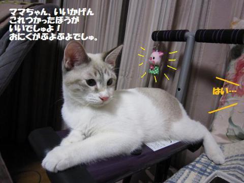 IMG_0908ムーたん