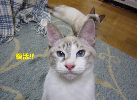 IMG_0885ムーくん②