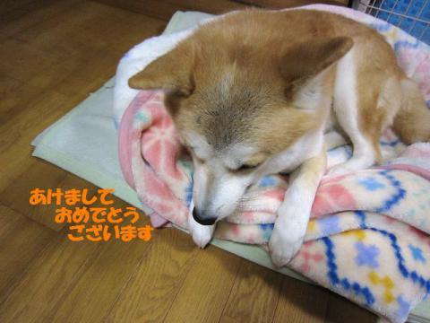 IMG_2043うめちゃん
