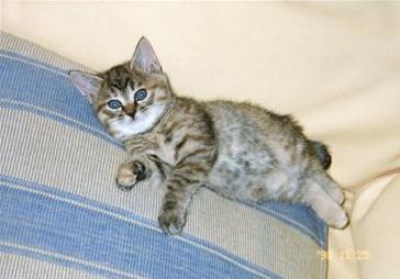子猫時代はもっと低かった・・・