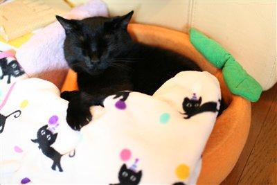 黒猫ブランケット