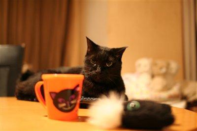 黒猫グッズと共に