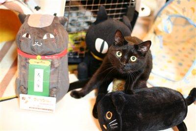 黒猫に囲まれて